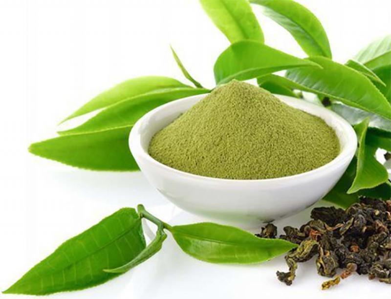 Green Tea Extract 15% EGCG Powder