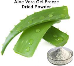 Aloe Vera Gel Freeze Dried Powder_Ginkgo Biloba Extract Green Tea Extract Aloe Vera gel freeze dried powder Plant extract Botanical extract