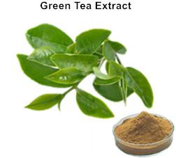 Natural Polyphenols Green Tea Extract_Ginkgo Biloba Extract Green Tea Extract Aloe Vera gel freeze dried powder Plant extract Botanical extract