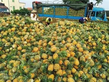 Pineapple Powder