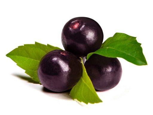 Acai Euterpe Oleracea Fruit Extract - Bio Botanica