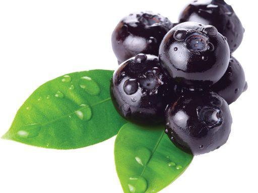 Bilberry Vaccinium Myrtillus Fruit Extract - Bio Botanica