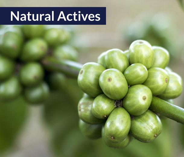 Botanical Extracts  - CAIF - Concentrated Active Ingredients & Flavors - CAIF
