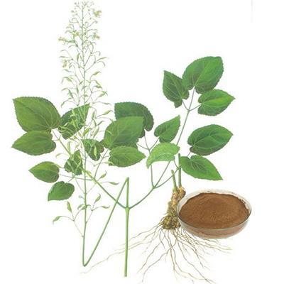 Epimedium Extract-Changsha Zhongren Biotechnology Co., Ltd.