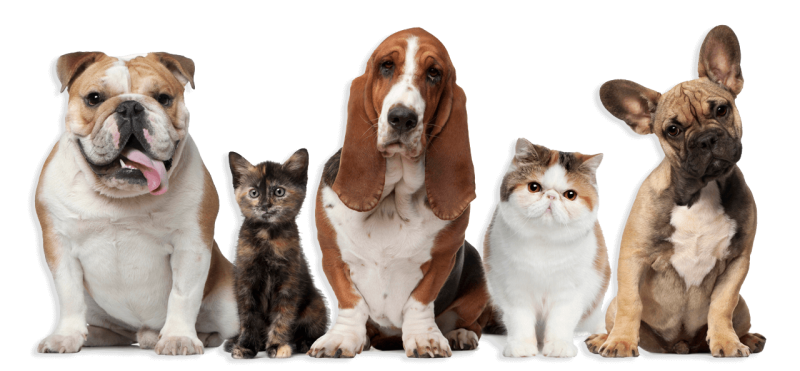 Cypress Ingredients Pet Nutrition - Cypress Ingredients   Our Science is Golden