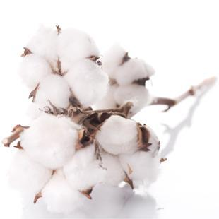 Cellulose Gum | Hydrocolloids - DuPont | Danisco