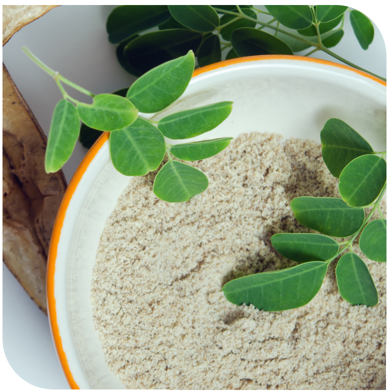 HC30P Moringa Extract – Herbochem