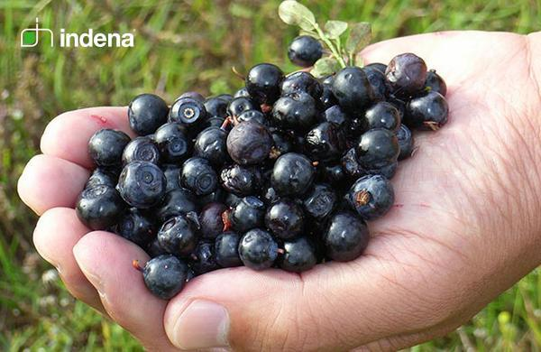 Indena Leadership, Health Food, Plant Derived