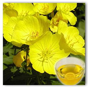 Healthy Oils, Plant Extracts - JILIN BAILI BIOTECHNOLOGY CO., LTD