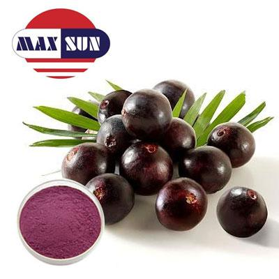 Acai Extract Manufacturer & Suppliers & Distributor - Wholesale Bulk Acai Extract for Sale from Factory - MAXSUN