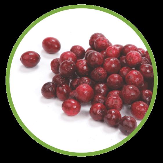 Cranberry - MicroDried & IQF