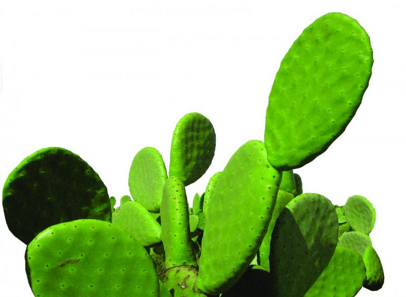 NeOpuntia™: The world recognized healthy lipophilic fiber