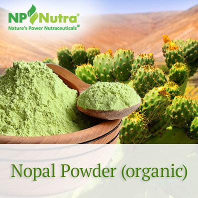 Nopal Powder (organic)