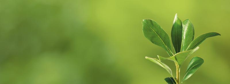 Botanicals — Pure Ground Ingredients