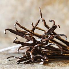 Vanilla absolute - Robertet Groupe – Vanilla absolute ingredient for perfume