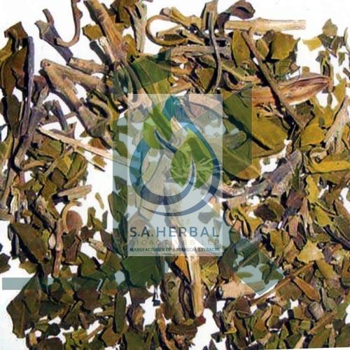 Adhatoda Vasica Extract - Standardized Botanical Extracts Manufacturer
