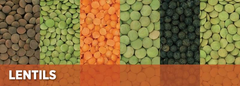 Scoular Special Crops