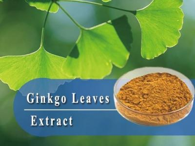 Ginkgo Biloba Extract-Herbal extract,Chinese Herbal extract, Herb extracts,Plant extract-Shandong TianHua Pharmaceutical Co., Ltd.