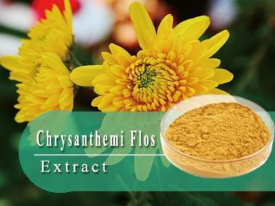 Chrysanthemum Flower Extract-Herbal extract,Chinese Herbal extract, Herb extracts,Plant extract-Shandong TianHua Pharmaceutical Co., Ltd.