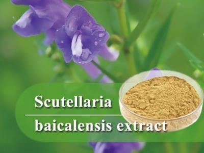 Scutellaria baicalensis extract-Herbal extract,Chinese Herbal extract, Herb extracts,Plant extract-Shandong TianHua Pharmaceutical Co., Ltd.