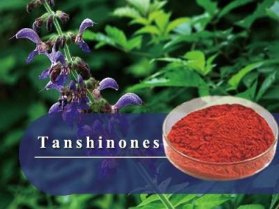 Tanshinone-Herbal extract,Chinese Herbal extract, Herb extracts,Plant extract-Shandong TianHua Pharmaceutical Co., Ltd.