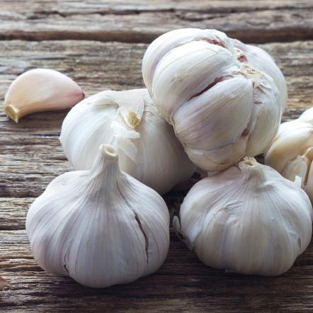 Dried & Dehydrated Garlic Powder | Silva International - Silva International