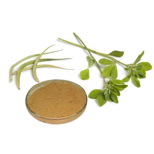 Gymnema Sylvestre Extract 25% Gymnemic Acids
