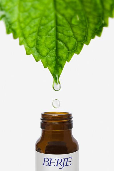 Whole Herb Company