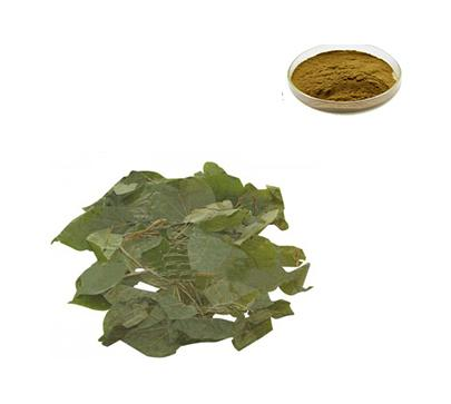 Epimedium Extract Powder - Gaoyuan Bio-Chem