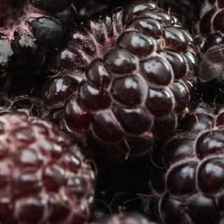 Black Raspberry Seed Oil