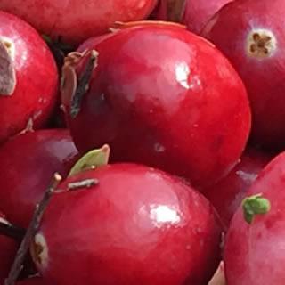 Cranberry Seed Nutri-Powder