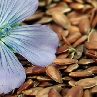 Flax Seed Nutri-Powder