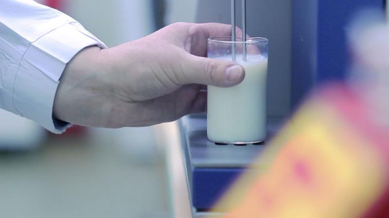 Dairy powders - Ingredia Dairy Experts