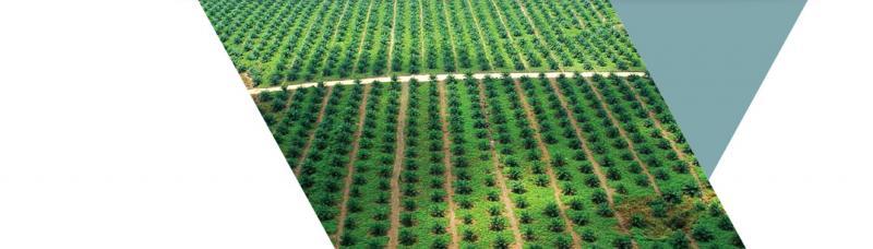 Plantations | Wilmar International