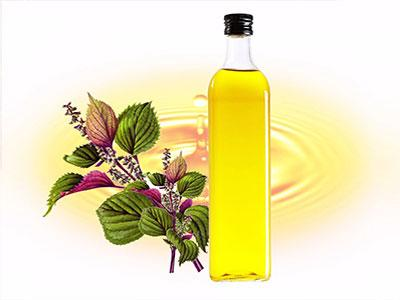 perilla seed oil manufacture