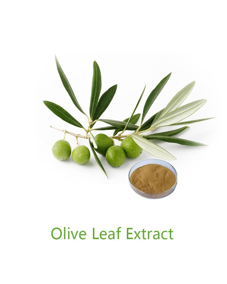OLIVE LEAF EXTRACT_Forward Farma Inc.