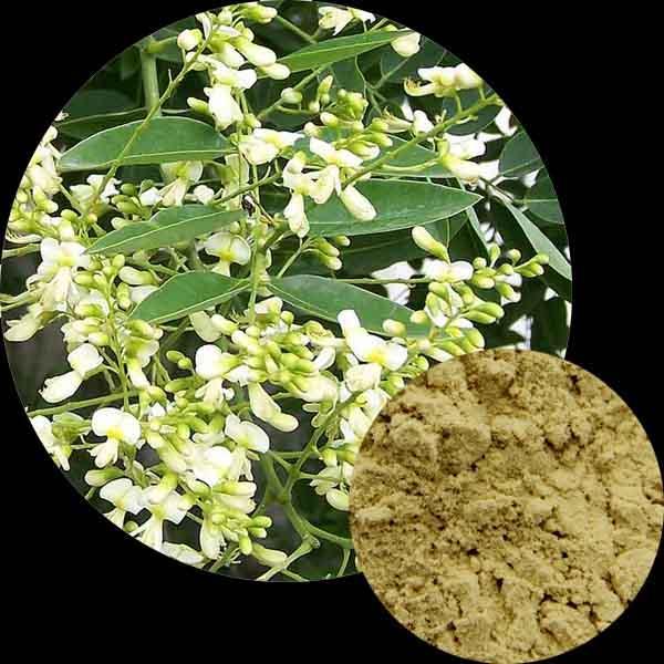 Flavonoids Rutin, Troxerutin Extract, Diosmin Powder, Hesperidin P.E Powder Wholesale, Cytisine Supplier
