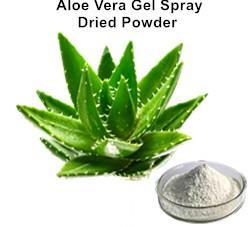 Aloe Vera Gel Spray Dried Powder_Ginkgo Biloba Extract Green Tea Extract Aloe Vera gel freeze dried powder Plant extract Botanical extract