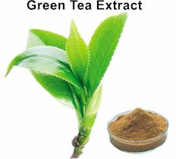 Green Tea Extract 45%-50% EGCG_Ginkgo Biloba Extract Green Tea Extract Aloe Vera gel freeze dried powder Plant extract Botanical extract