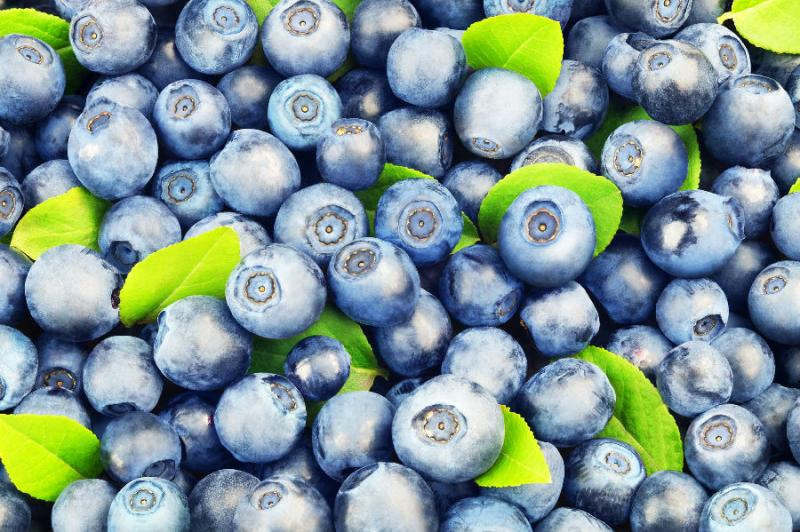 Bilberry Extract-Botanical Extracts-Auropure LifeScience Co., Ltd.