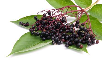 Elderberry Juice Color