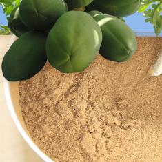 Organic Green Papaya Powder - Shining Seas Imports