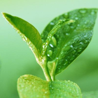 Hunan Nutramax Inc. The leading manufactor of Botanical Extract in China