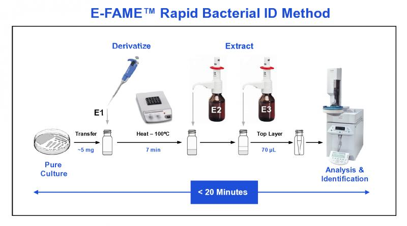 Fatty Acid Analysis | Bacterial ID | MIDI Inc.
