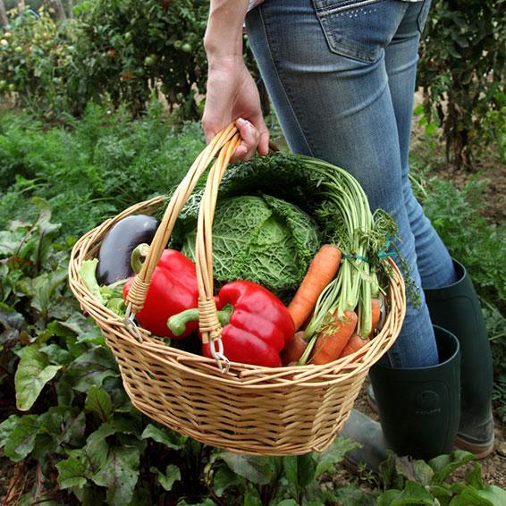 Sourcestainable® – Organic Ingredients | RFI Ingredients