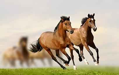 Equine - RiceBran Technologies