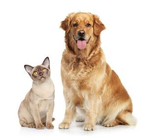 Pet Supplements - Robinson Pharma, Inc.