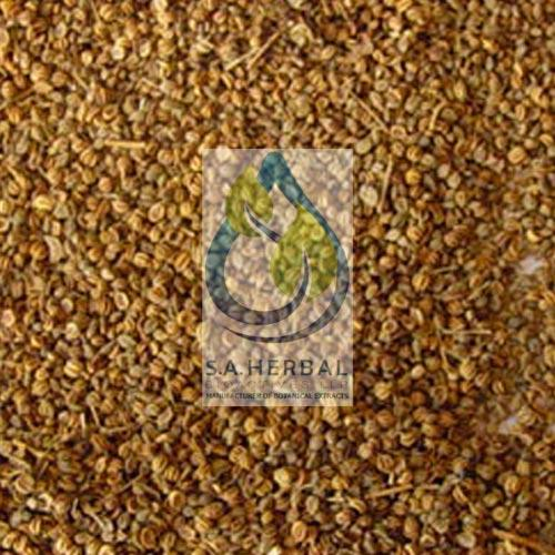 Apium Graveolens Seed Extract Standardized Herbal Extract Manufacturer