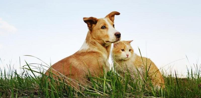 AGRO-VET | PROBIOTICS FOR PET - Sacco System