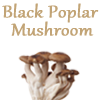 Super Beta Glucan, Medicinal Mushroom Beta Glucans for Immune Health | Medicinal Mushrooms